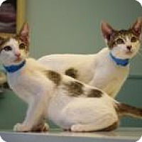 Adopt A Pet :: Frijole - Dallas, TX