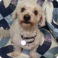 Adopt A Pet :: Foster - Mukwonago, WI