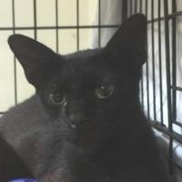 Adopt A Pet :: RUBY - St. Thomas, VI