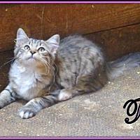 Adopt A Pet :: Tia - Culpeper, VA