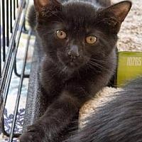 Adopt A Pet :: Cocoa - New York, NY