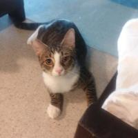 Adopt A Pet :: Hades - Belle Chasse, LA