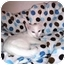 Photo 1 - Domestic Shorthair Kitten for adoption in Irvine, California - Freckles