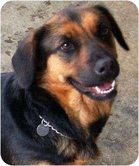 Hound (Unknown Type) Mix Dog for adoption in Staunton, Virginia - Dixie