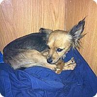 Adopt A Pet :: Princess Laya - Donaldsonville, LA