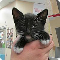 Adopt A Pet :: Jim - Gilbert, AZ
