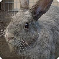 Adopt A Pet :: Clara - Santa Barbara, CA
