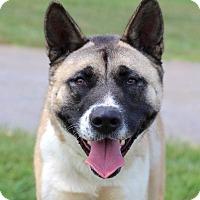 Adopt A Pet :: Zoe - Virginia Beach, VA