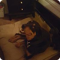 Adopt A Pet :: Miles - El Paso, TX