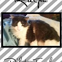 Adopt A Pet :: Ralph - Bogalusa, LA