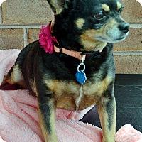 Adopt A Pet :: Mimi - Bridgeton, MO