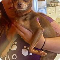 Adopt A Pet :: Lulu - Boca Raton, FL