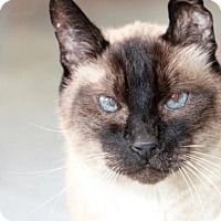 Adopt A Pet :: COCO - Camarillo, CA
