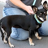 Adopt A Pet :: Charlotte - Palmdale, CA