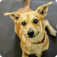 Adopt A Pet :: Sawyer - Tavares, FL