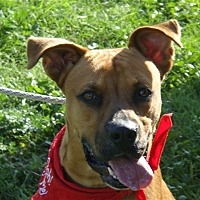 Adopt A Pet :: Zack - Corpus Christi, TX