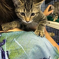 Adopt A Pet :: Cedrick - Lawrenceville, NJ