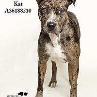 Adopt A Pet :: Kat - Baton Rouge, LA