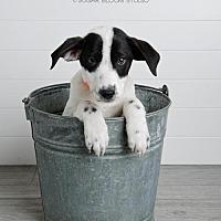 Adopt A Pet :: Cuba - Denver, CO
