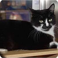 Adopt A Pet :: Mystery - New Port Richey, FL