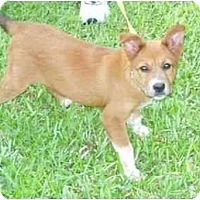 Adopt A Pet :: Little Lost Princess - Kingwood, TX
