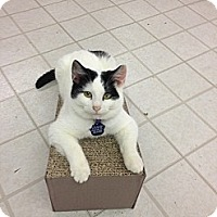 Adopt A Pet :: Si - Aiken, SC
