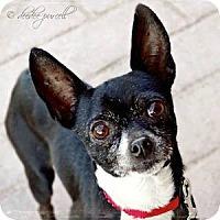 Adopt A Pet :: Gus - Gilbert, AZ