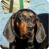 Adopt A Pet :: Sam I Am - Dallas, TX