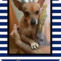 Adopt A Pet :: Stephen - Scottsdale, AZ