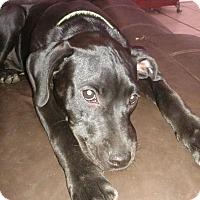 Adopt A Pet :: Kaycee - Tampa, FL