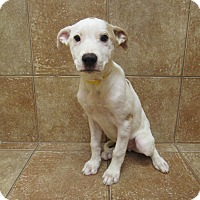 Adopt A Pet :: Denny *Petsmart GB* - Appleton, WI