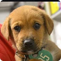 Adopt A Pet :: Margo & Tike AD 07-17-17 - Preston, CT
