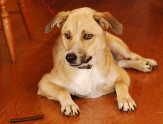Terrier (Unknown Type, Small) Mix Dog for adoption in Garland, Texas - Turq
