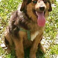 Adopt A Pet :: Reggie - Oswego, IL