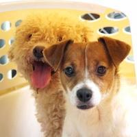 Adopt A Pet :: Quinn - New Freedom, PA