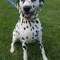 Adopt A Pet :: Opal - Oakland, MI