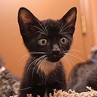 Adopt A Pet :: A..  Nelson - Charlotte, NC
