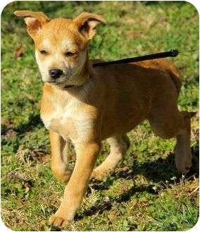 Husky Mix Puppy for adoption in Harrisonburg, Virginia - Annabell