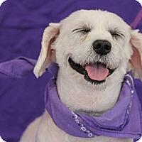 Adopt A Pet :: Etta - San Angelo, TX