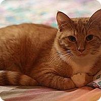 Adopt A Pet :: Venus and Valentine - Columbia, MD