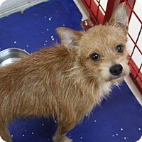 Adopt A Pet :: Max - Rockwall, TX