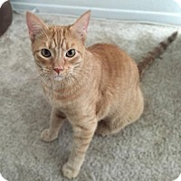 Adopt A Pet :: Tizzy Bean - Mission Hills, CA