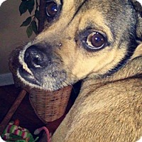 Adopt A Pet :: Charlie 1 in CT - Manchester, CT
