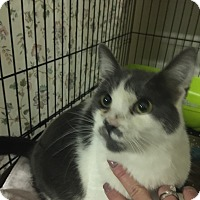 Adopt A Pet :: Sarge - Byron Center, MI
