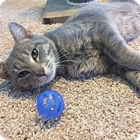 Adopt A Pet :: RILEY - Burlington, NC