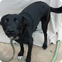 Adopt A Pet :: Remus - Olympia, WA