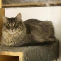 Adopt A Pet :: Buster - Frankenmuth, MI