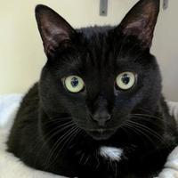 Adopt A Pet :: Fluffy - Stroudsburg, PA