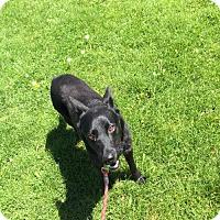 Adopt A Pet :: Treble - Littleton, CO