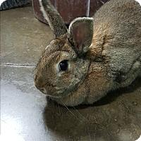 Lop-Eared Mix for adoption in Pottsville, Pennsylvania - Dimitri